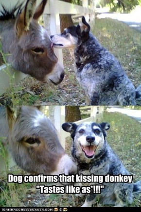"Dog confirms that kissing donkey ""Tastes like as*!!!"""