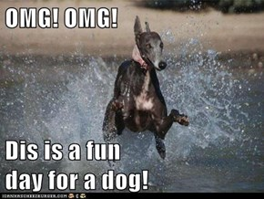 OMG! OMG!  Dis is a fun                                                    day for a dog!
