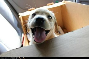 Cyoot Puppy ob teh Day: I has a happy!