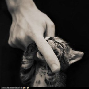 Cyoot Kitteh of teh Day: Finger Food