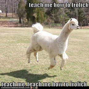 teach me how to frolick  teach me, teach me how to frolick