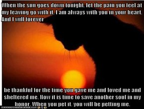 When the sun goes down tonight, let the pain you feel at my leaving go with it. I am always with you in your heart. And I will forever   be thankful for the time you gave me and loved me and sheltered me. Now it is time to save another soul in my honor. W