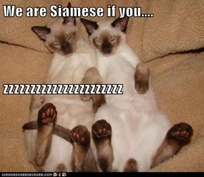 We are Siamese if you.... zzzzzzzzzzzzzzzzzzzzzz