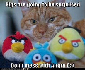 Pigs are going to be surprised  Don't mess with Angry Cat