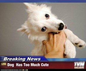 Breaking News - Dog  Has Too Much Cute
