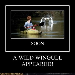A WILD WINGULL APPEARED!