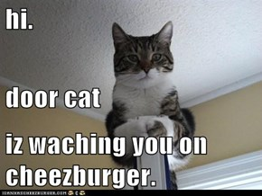 hi. door cat iz waching you on cheezburger.
