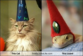 This Cat Totally Looks Like This Lizard