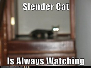 Slender Cat  Is Always Watching