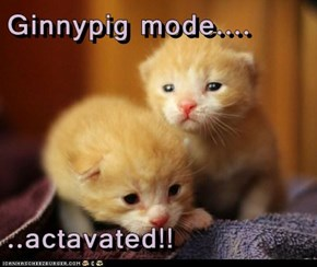 Ginnypig mode....  ..actavated!!