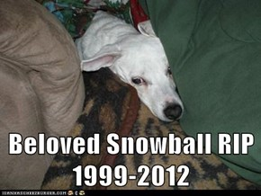 Beloved Snowball RIP 1999-2012