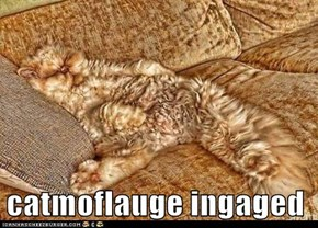 catmoflauge ingaged
