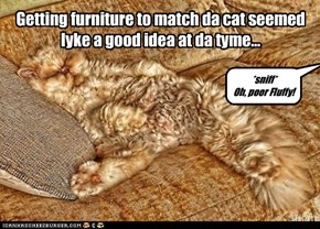 Getting furniture to match da cat seemed lyke a good idea at da tyme...