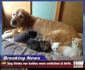 Breaking News - Dog thinks her babies were switched at birth.
