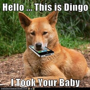 Hello ... This is Dingo  I Took Your Baby