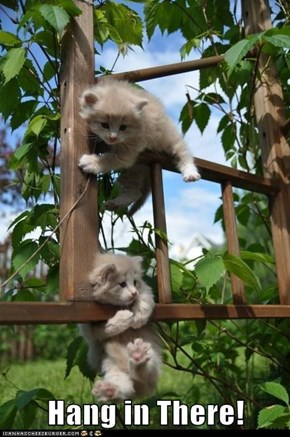 Hang in There!