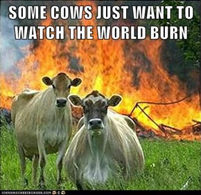 SOME COWS JUST WANT TO WATCH THE WORLD BURN