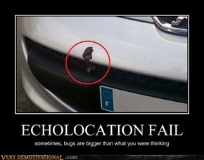 ECHOLOCATION FAIL
