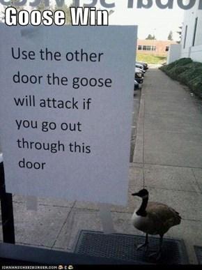 Goose Win
