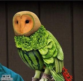 Owl WIN