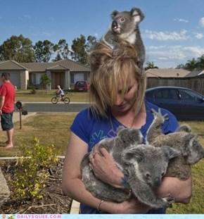 Koala Accessories