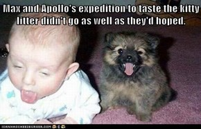 Max and Apollo's expedition to taste the kitty litter didn't go as well as they'd hoped.