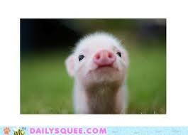 Little Pink Nose