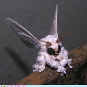 Creepicute: Squeest Moth