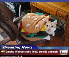Breaking News - Oprahs Winfreys cat's THIRD suicide attempt!