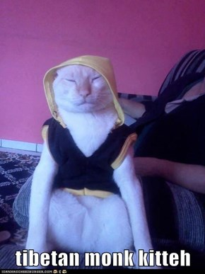 tibetan monk kitteh
