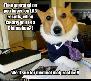 They operated on you based on LAB results, when clearly you're a Chihuahua?!
