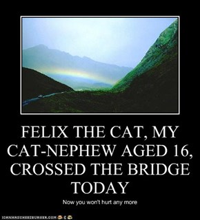FELIX THE CAT, MY CAT-NEPHEW AGED 16, CROSSED THE BRIDGE TODAY