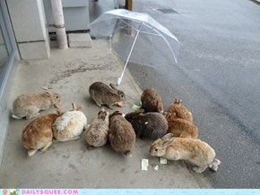 Bunday: Rainy Day Rabbits