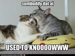 sumbuddy dat ai