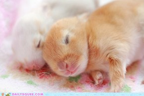 Itsy Bitsy Baby Bunnies