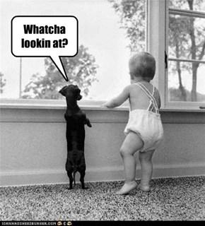 Whatcha lookin at?
