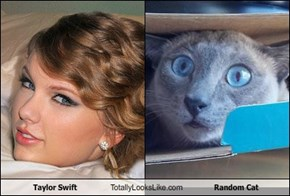 Taylor Swift Totally Looks Like Random Cat