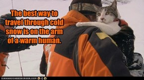 The best way to travel through cold snow is on the arm of a warm human.