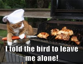 I told the bird to leave me alone!
