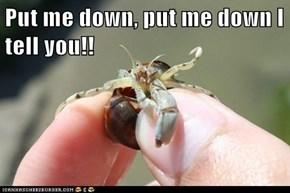 Put me down, put me down I tell you!!