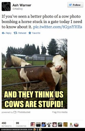 AND THEY THINK US COWS ARE STUPID!