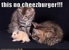 this no cheezburger!!!