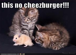 this no cheezburger!!!