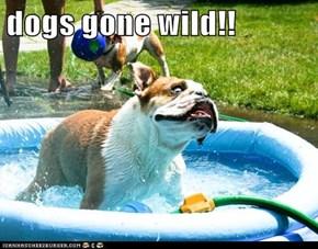 dogs gone wild!!