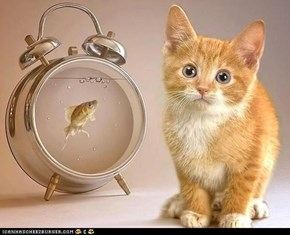 Cyoot Kitteh of teh Day: Dinner Time?