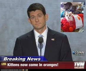 Breaking News - Kittens now come in oranges!
