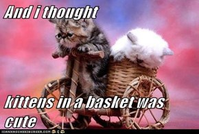 And i thought  kittens in a basket was cute