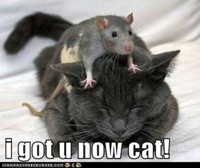 i got u now cat!