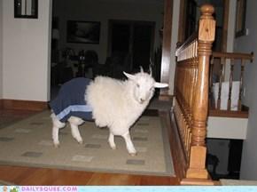 Goat Pants