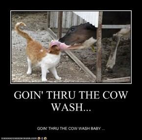 GOIN' THRU THE COW WASH...